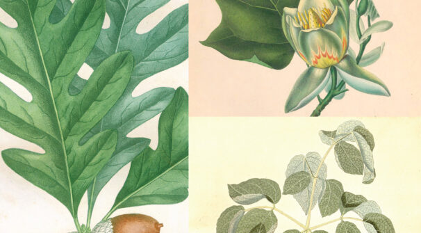 Virtual Lecture: Medicinal Plants of the Civil War with Lesley Parness